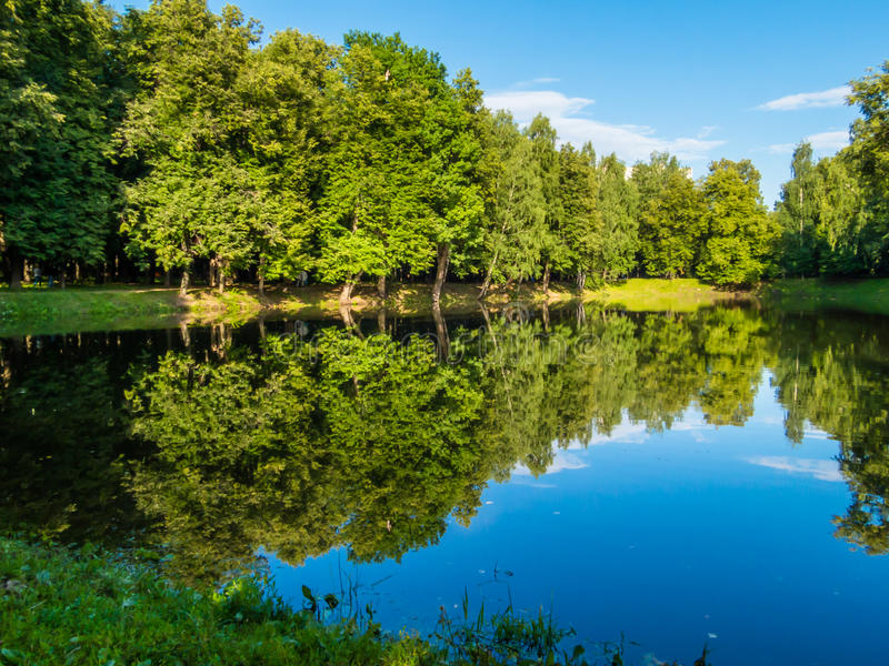 Forest pond at summer. Forest pond at the summer in Russia royalty free stock image