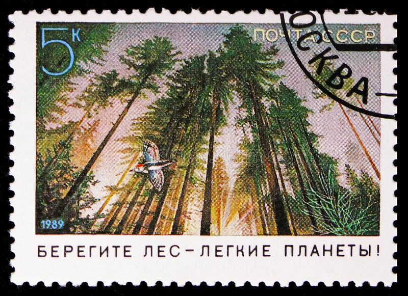Forest protection, Lesser Spotted Woodpecker - Dryobates min, Nature Conservation serie, circa 1989. MOSCOW, RUSSIA - NOVEMBER 10, 2018: A stamp printed in USSR royalty free stock photos