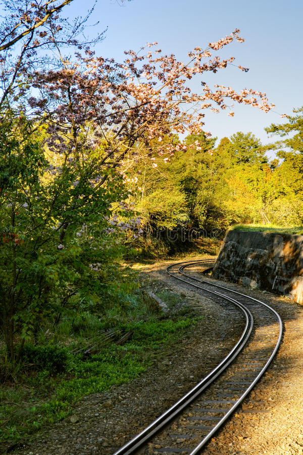 Forest Railway Royalty Free Stock Image