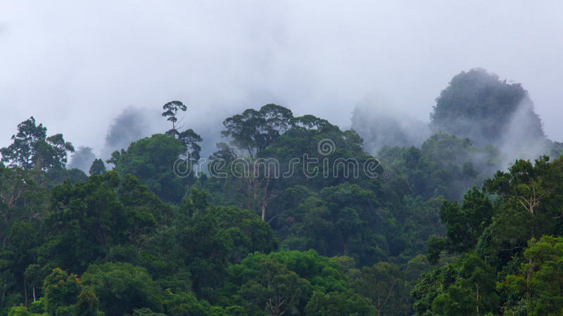 Forest in rain stock photography