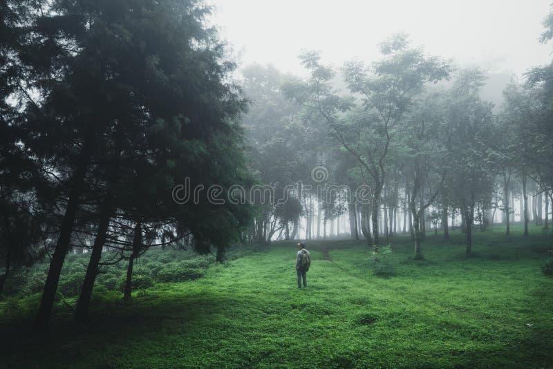 Forest Rain en mist in het bos royalty-vrije stock foto's
