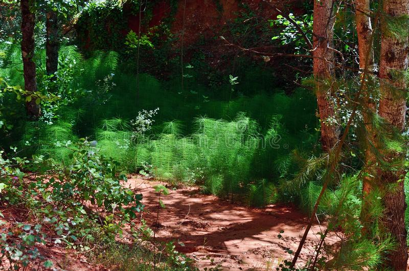 Provencal Colorado, Provence, France. Forest with red rocks in the Provencal Colorado park. Popular trekking route, once ochre quarries and now a strange stock photo