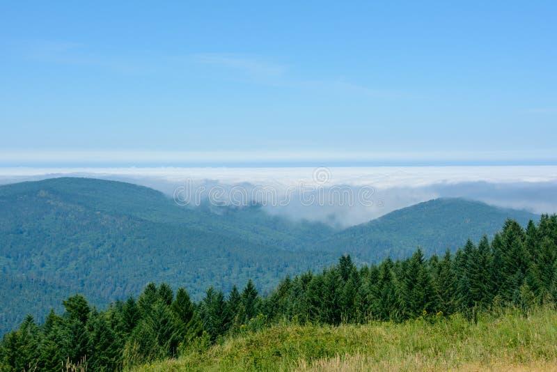 Forest Redwood National Park, Califórnia EUA fotografia de stock royalty free