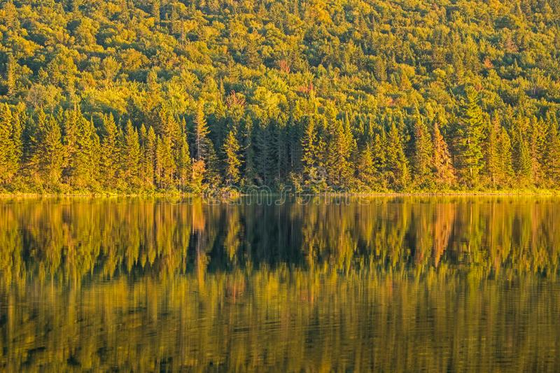 Forest Reflected On Big Nictau Lake In New Brunswick. Looking across Big Nictau Lake at Mount Sagamook in Mount Carleton Provincial Park. The location is in the stock images