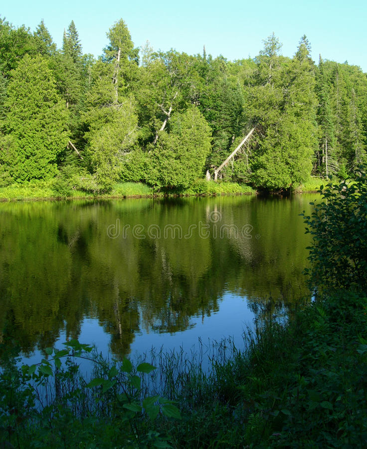 Forest reflected in lake stock image