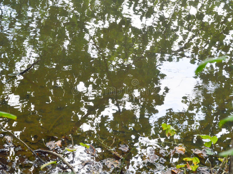 Forest reflected in a Lake royalty free stock photos