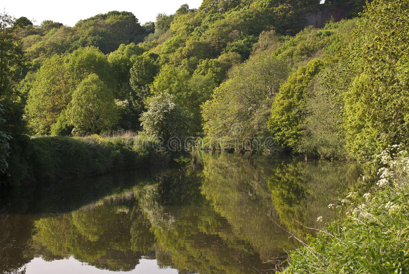 Download Forest reflected on river stock image. Image of dense - 17986557