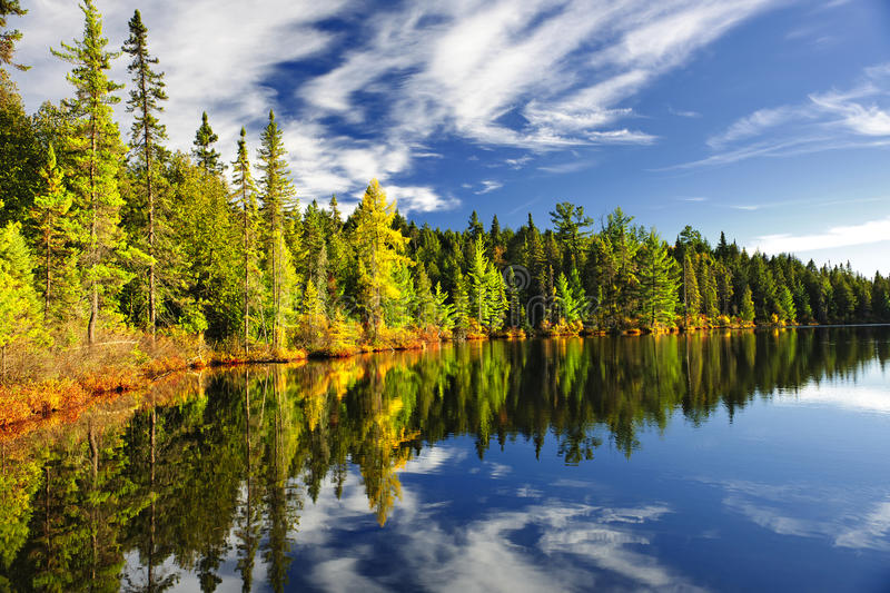 Download Forest Reflecting In Lake Royalty Free Stock Image - Image: 23506576