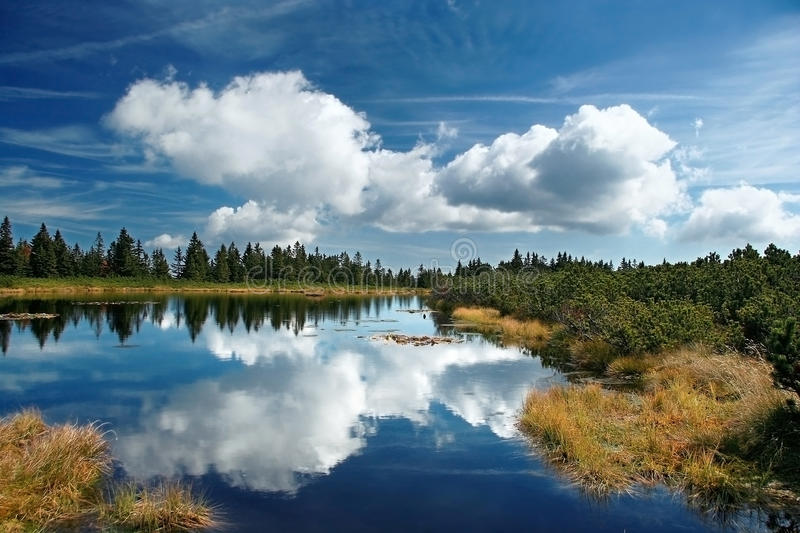 Download Forest reflection stock photo. Image of slovenia, hills - 13299376