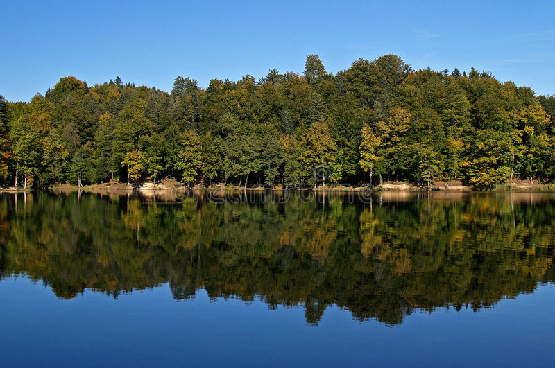 Forest reflection in lake stock photo