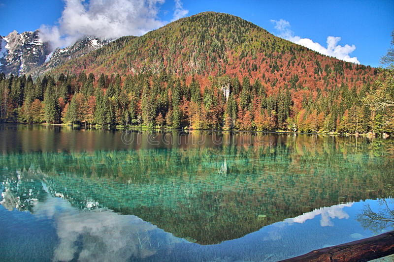 Forest Reflection in Lake. View of forest reflected in lake, Triglav National Park, Slovenia. The extensive brown colour of the trees is due to late frost damage stock image
