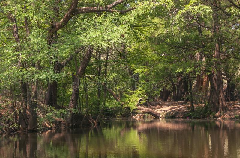 Forest reflection on the river with a nice walk path by the side. Inmanuel doblado guanajuato mexico stock photos