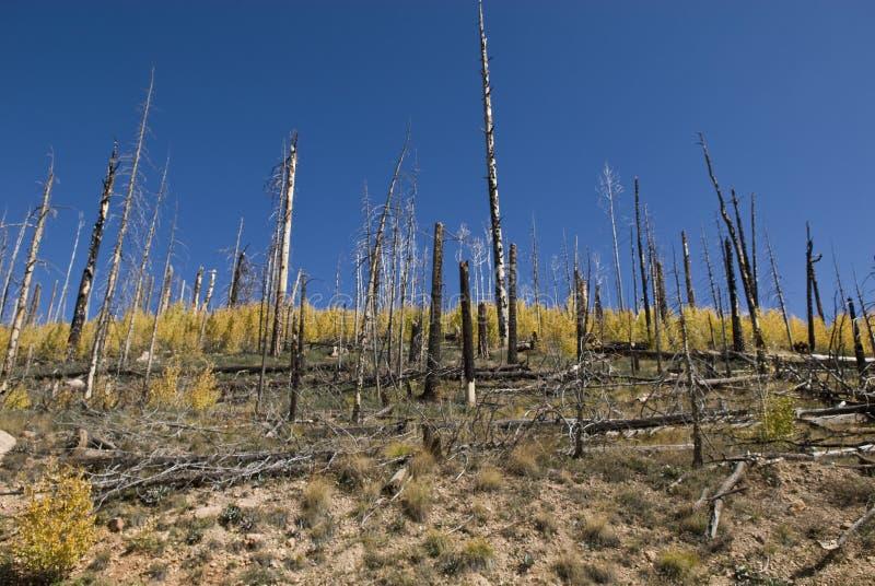 forest regeneration στοκ φωτογραφία με δικαίωμα ελεύθερης χρήσης