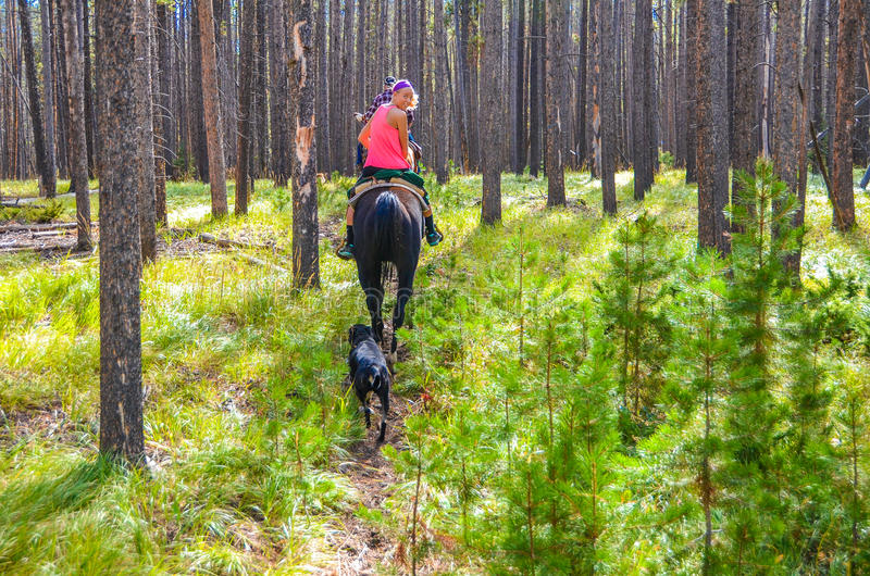 Forest Ride - Medicine Bow National Forest - Wyoming royalty free stock image