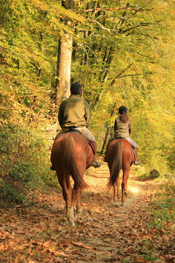 Forest riders royalty free stock photography