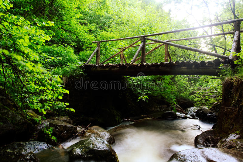 Download Forest river stock photo. Image of fresh, background - 19885420