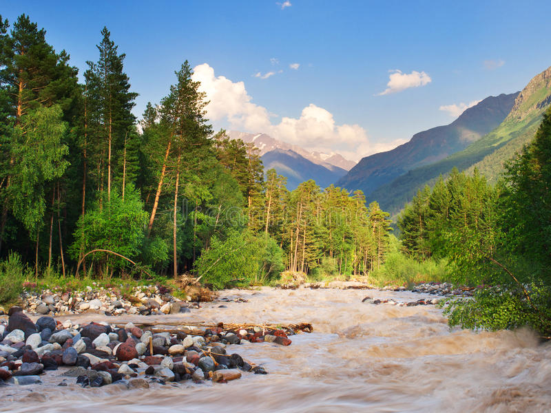 Forest and river royalty free stock photo