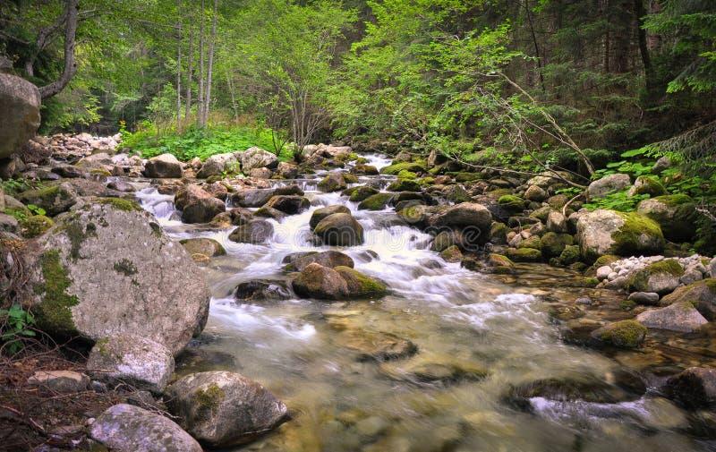 Forest River royaltyfria foton