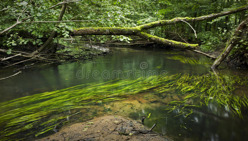 Forest River photo libre de droits
