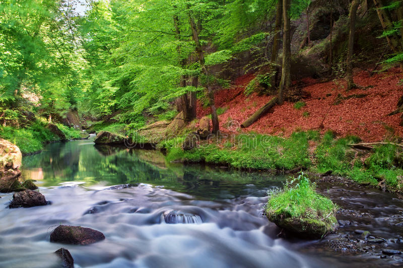 Forest and river stock image