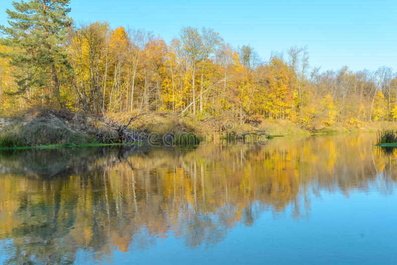 Forest River imagens de stock