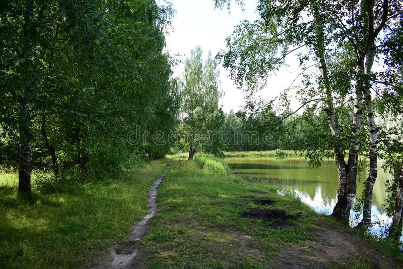 Forest river. On the banks grow weeping willows that bend their branches over the water of the pond. The water reflects the sky. And passing clouds. Rest near royalty free stock image