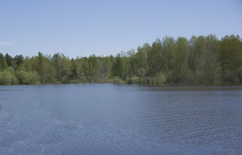 Forest river beautiful view developing.  royalty free stock photos