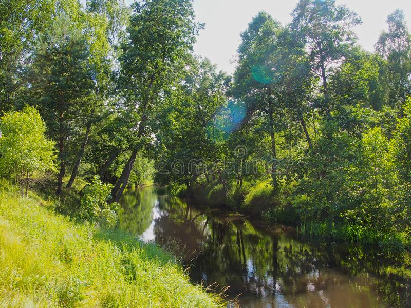 Forest river in Central Russia. Summer , sun stock photo