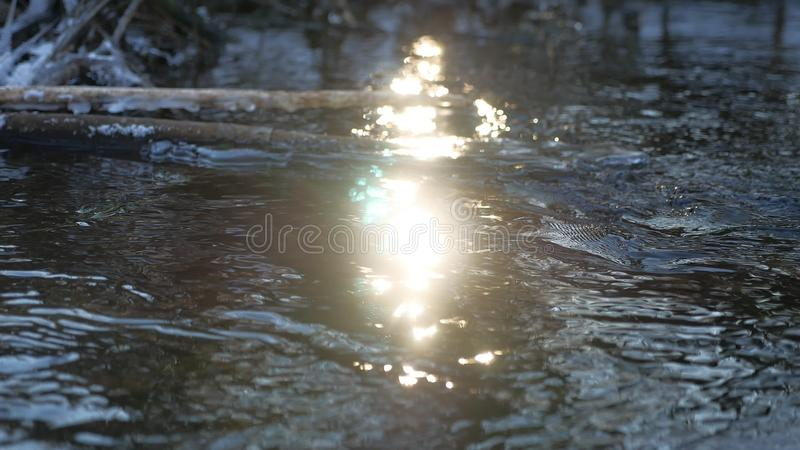 Forest river flowing beautiful frozen ice on a dry branch swinging, sunlight, nature sun glare landscape. Forest river flowing beautiful frozen ice on dry branch stock photography