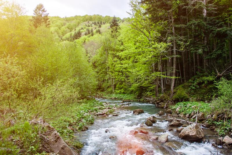 Forest river landscape. Summer green forest scenery royalty free stock photo