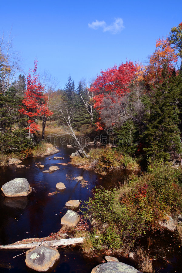 Forest river in Maine stock photo