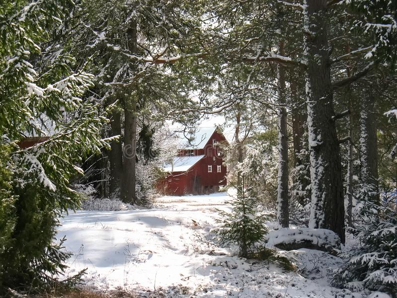 Log Cabin in forest in Sweden, Europe stock images
