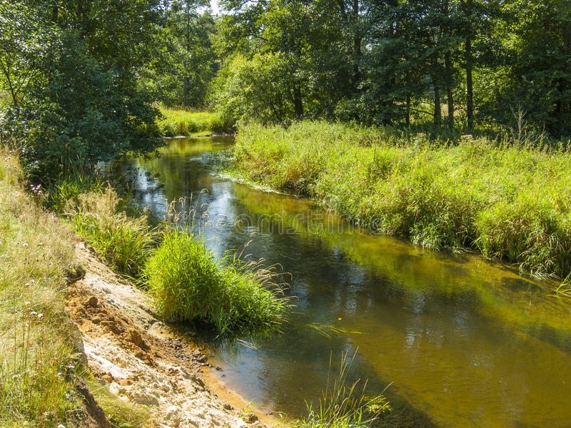 Forest river, Belarus stock image