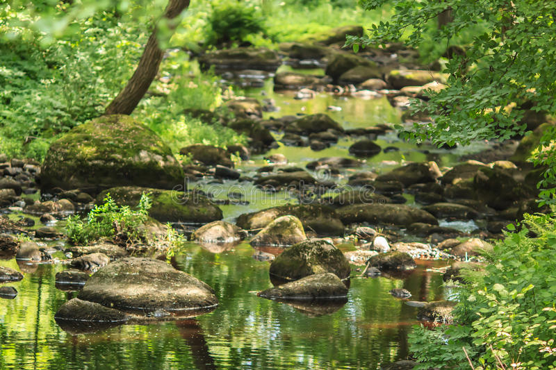 Forest river and stones royalty free stock photos