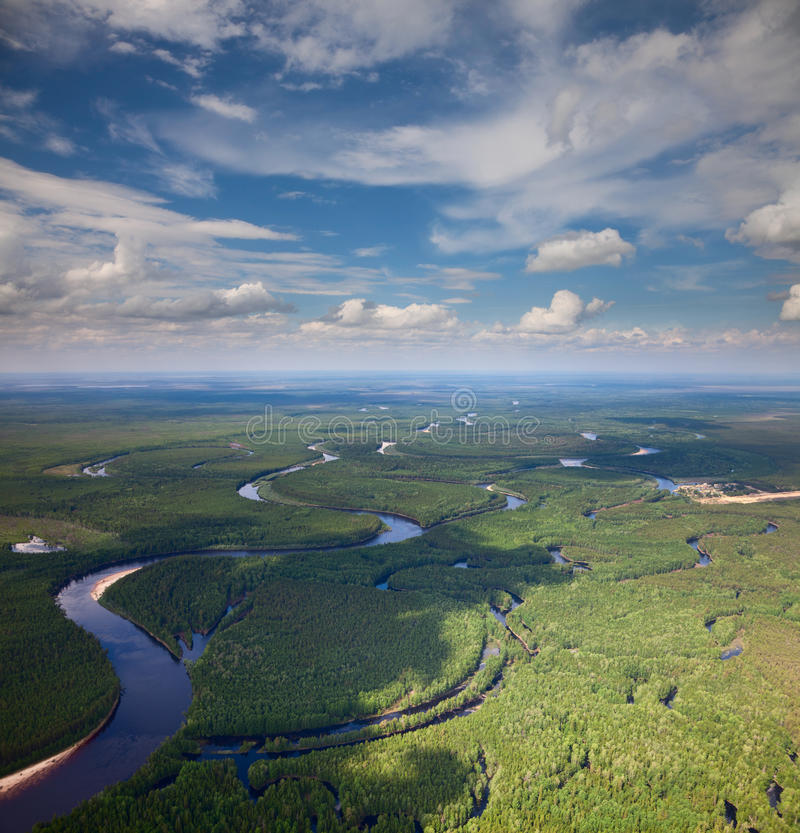 Forest river in summer, top view stock image