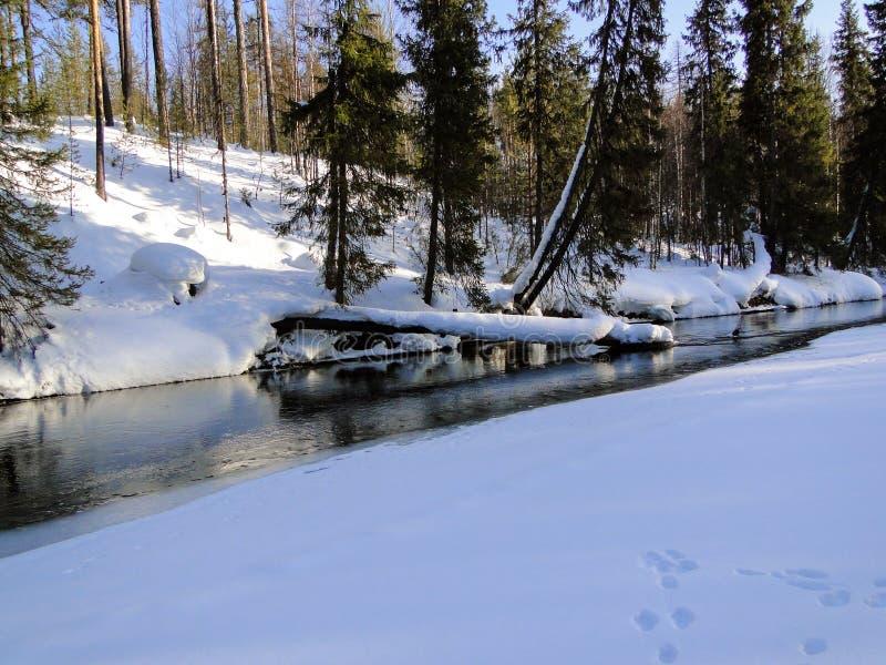 Forest River tidigt i vinter arkivbild