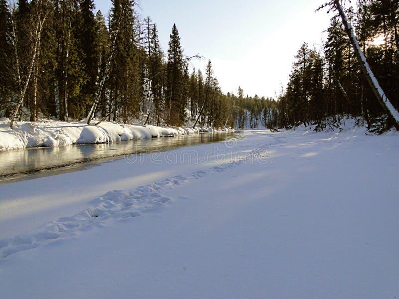 Forest River tidigt i vinter royaltyfria bilder