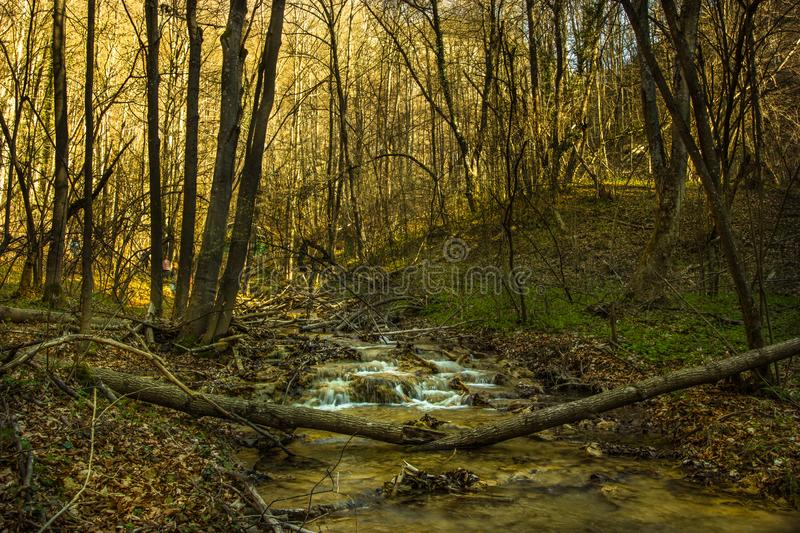 Forest River, tranquility and harmony royalty free stock image