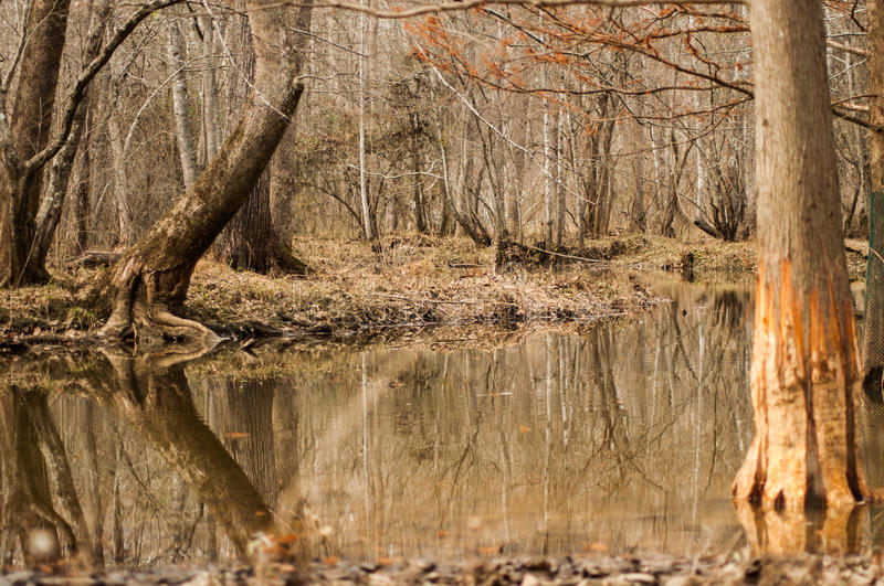 Forest and river. Winter flooding of a river with trees royalty free stock photography