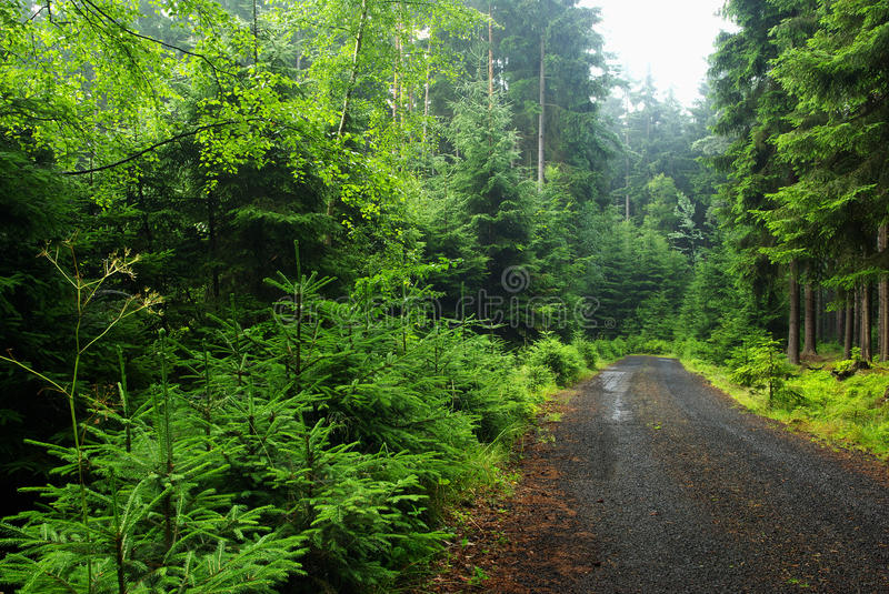 Forest road. Morning view of forest road royalty free stock image