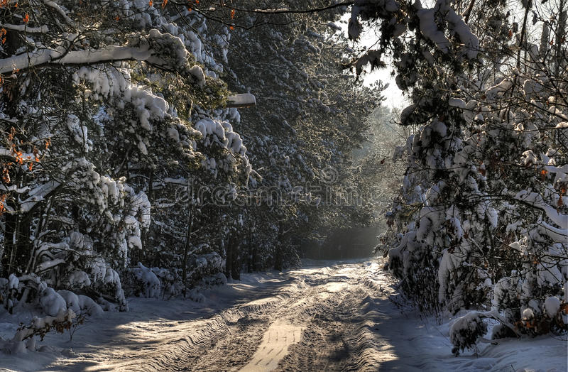Download Forest road stock image. Image of beautiful, seasonal - 17427961