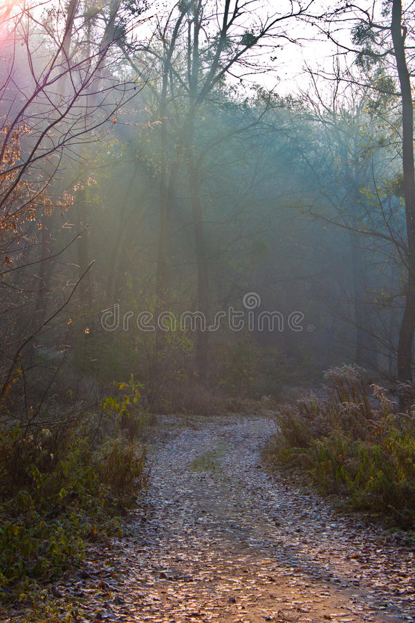 Forest road. The forest road is bent between trees stock image