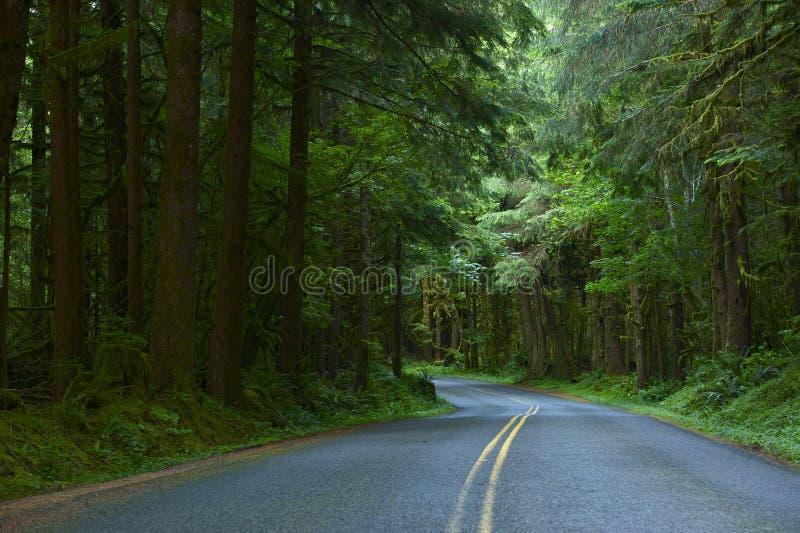 Forest Road royaltyfria foton