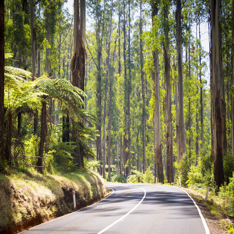 Forest Road imagens de stock royalty free