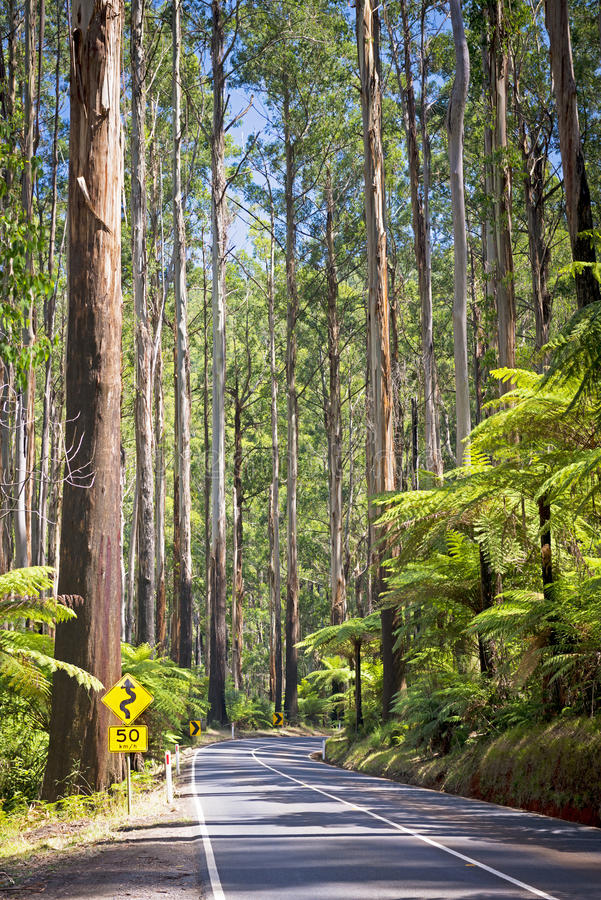 Forest Road fotografía de archivo