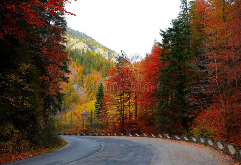 Forest Road Autumn royalty free stock images