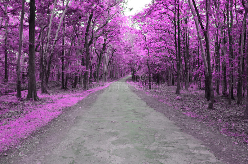 Forest road in autumn. Color modified with pink infrared tones stock image