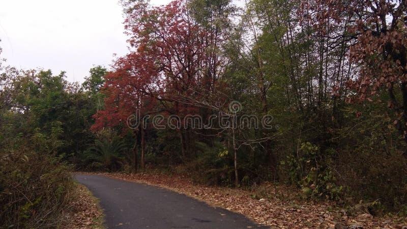 Forest Road djungel arkivfoton