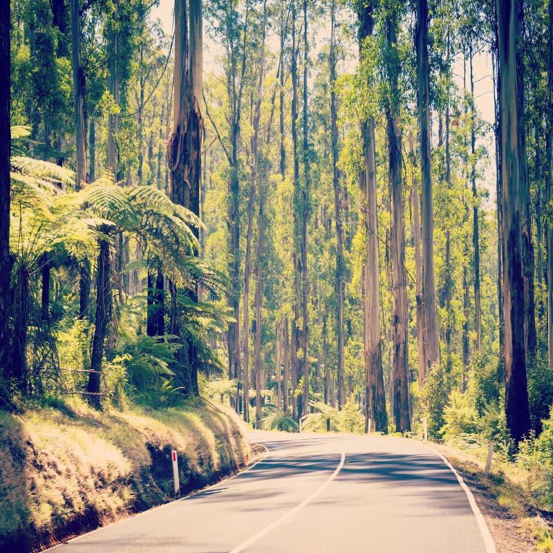 Forest Road Filtered imagen de archivo libre de regalías