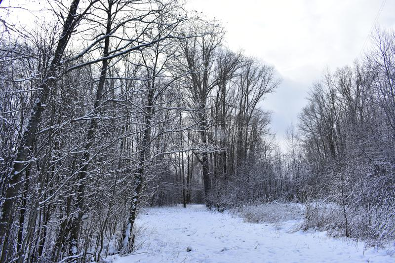 In the forest on the road the first snowfall. The snow is gentle, clean, lying on the ground, the road, branches of trees royalty free stock photos